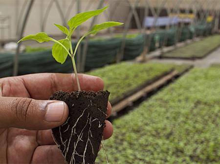 Plantulas y semillas 5