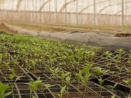 Plantulas y semillas 6